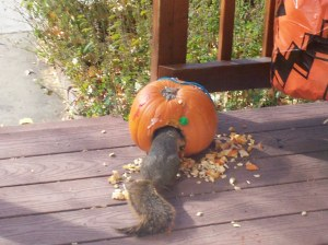 Attacking pumpkin two