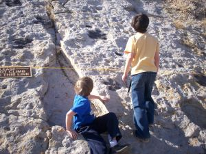 Looking at Dino tracks